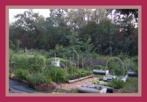 eg garden veg